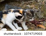 two kittens look at stick on...   Shutterstock . vector #1074719003