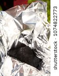 Small photo of Man packing meteorite found on spring meadow to aluminium foil