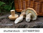 harvested at autumn amazing... | Shutterstock . vector #1074889583