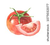 tomato cut and full watercolor... | Shutterstock . vector #1075032077