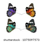 a close up of beauty  butterfly ... | Shutterstock . vector #1075097573