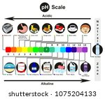 ph scale infographic diagram... | Shutterstock . vector #1075204133