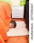 playful child is hiding under... | Shutterstock . vector #1075340267