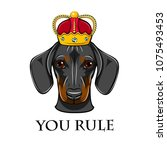 dachshund dog king queen. crown.... | Shutterstock .eps vector #1075493453