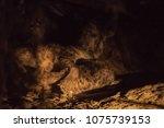 hyena mother suckling a cub at... | Shutterstock . vector #1075739153