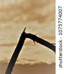 broken tree limb against a... | Shutterstock . vector #1075774007