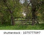landscape in the spring | Shutterstock . vector #1075777097