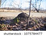 anthill near the road. the... | Shutterstock . vector #1075784477