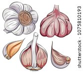 garlic whole and clove set.... | Shutterstock .eps vector #1075810193