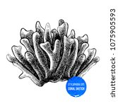 hand drawn stylophora sps coral ... | Shutterstock .eps vector #1075905593