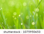 morning dew droplets on blades... | Shutterstock . vector #1075950653