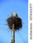pair of storks sitting in nest. ... | Shutterstock . vector #1076101577