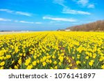 yellow field and blue sky.... | Shutterstock . vector #1076141897