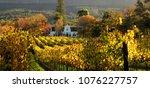 vineyards in the sunset | Shutterstock . vector #1076227757