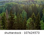 Forest closeup in early morning - stock photo