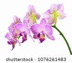 Focus Stacked Image Six Purple - Fine Art prints