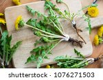 whole dandelion plant with root ... | Shutterstock . vector #1076271503