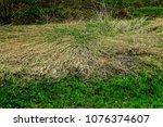 scenery of grassy weeds of new... | Shutterstock . vector #1076374607