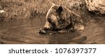 the grizzly bear also known as...   Shutterstock . vector #1076397377
