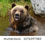 the grizzly bear also known as...   Shutterstock . vector #1076397383