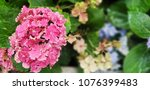 colorful of flowers bloom in... | Shutterstock . vector #1076399483