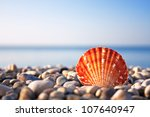 Sea Shell With Sea And Blue Sk...