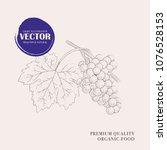 grape hand drawn illustration.... | Shutterstock .eps vector #1076528153