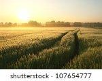 Dirt Road In A Wheat Field On ...
