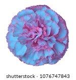 light blue pink  carnation... | Shutterstock . vector #1076747843