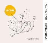 banana hand drawn illustration. ... | Shutterstock .eps vector #1076780747