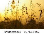 romantic nature impression   Shutterstock . vector #107686457