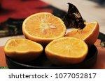 butterfly eats orange  | Shutterstock . vector #1077052817