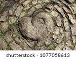 snail earth sacred | Shutterstock . vector #1077058613
