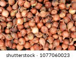 small bulbs of onion for... | Shutterstock . vector #1077060023