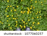 looking down on the pair of... | Shutterstock . vector #1077060257