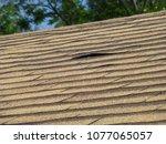 old damaged brown asphalt... | Shutterstock . vector #1077065057