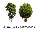 green tree isolated on white... | Shutterstock . vector #1077303053
