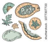 papaya sketch lettering....   Shutterstock .eps vector #1077307733