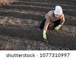 young peasant woman planted... | Shutterstock . vector #1077310997