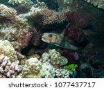 great barrier reef | Shutterstock . vector #1077437717