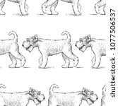 pattern of the terriers on a... | Shutterstock .eps vector #1077506537