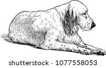 sketch of an old sad spaniel | Shutterstock .eps vector #1077558053