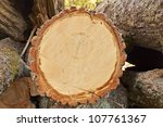 One Log Closeup Compared To...