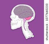 vector skull with brain ... | Shutterstock .eps vector #1077660233