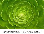 closeup of the center of a...   Shutterstock . vector #1077874253
