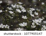 beautiful flowers in spring | Shutterstock . vector #1077905147