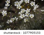 beautiful flowers in spring | Shutterstock . vector #1077905153