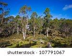 Old Australian Bush Shack ...