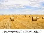 Field With Straw Bales After...