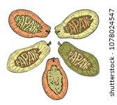 papaya lettering. set of...   Shutterstock .eps vector #1078024547